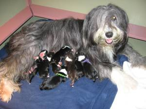 Casey and The Babies!