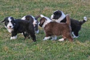 The Puppy Party Gang